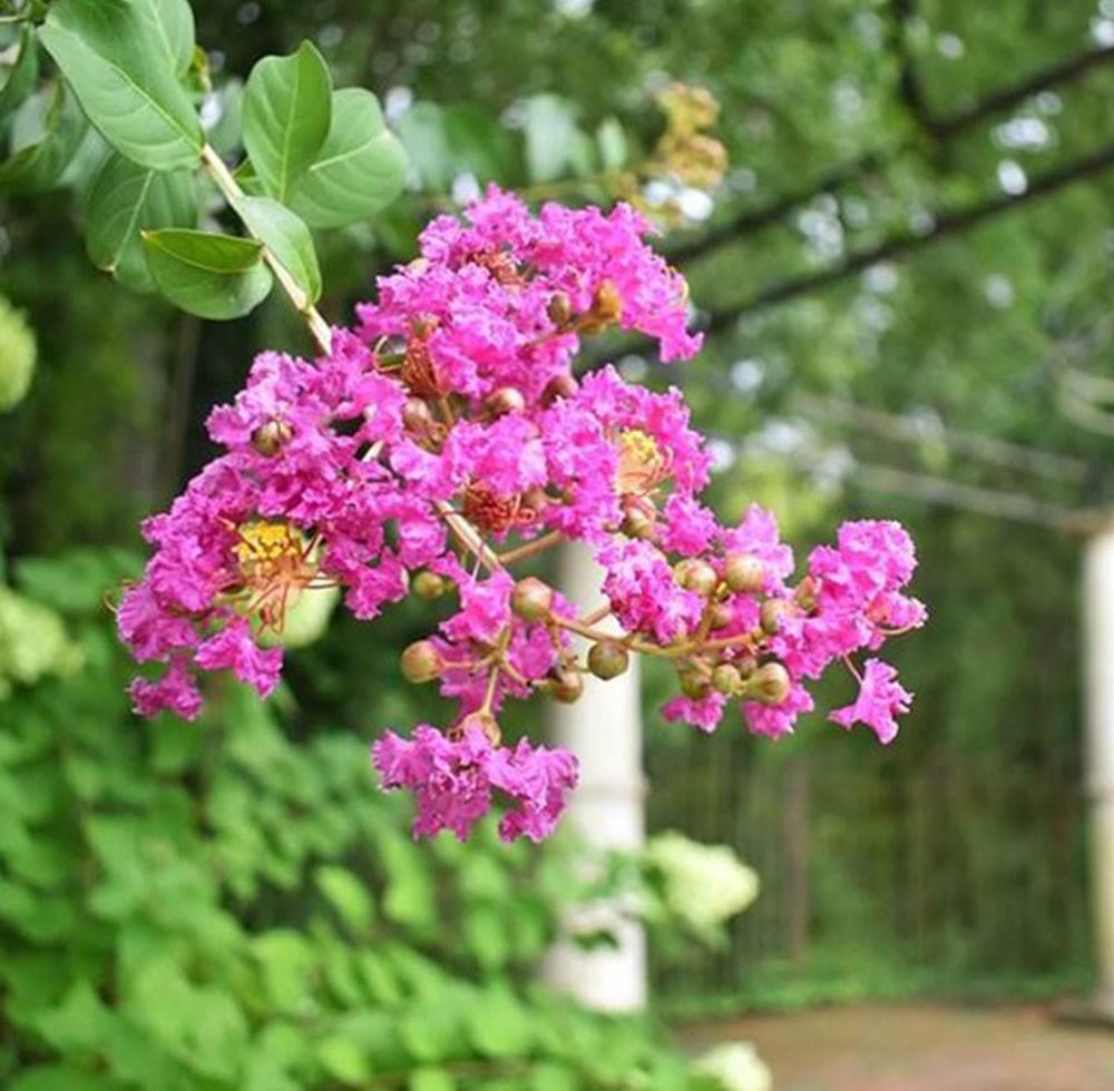 flowers in the wedding garden